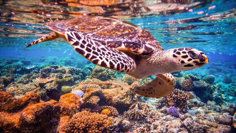Maledivy, fotka 7