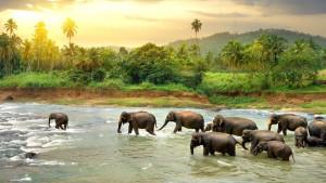 Srí Lanka, fotka 1
