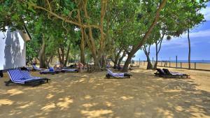 Hibiscus Beach, fotka 4