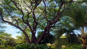Anelia Resort & SPA, fotka 2