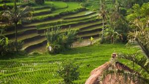 Velký okruh Jávou s pobytem na Bali, fotka 3