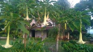 Velký okruh Jávou s pobytem na Bali, fotka 16