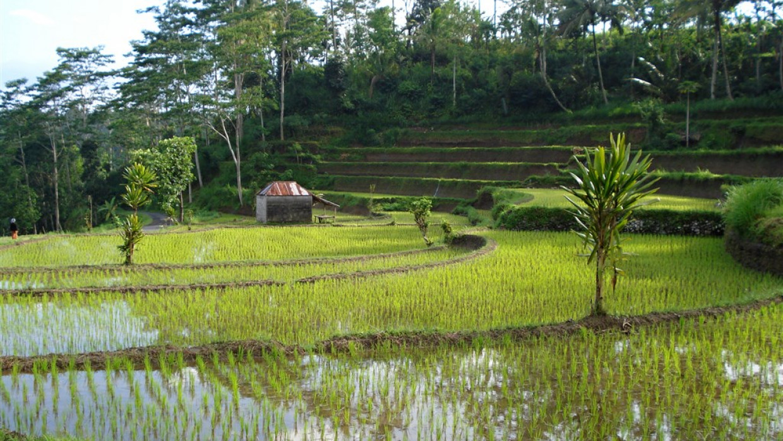 Na skok na Bali, fotka 17