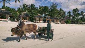 Melia Zanzibar, fotka 3