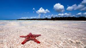 Neptune Paradise Beach Resort & Spa, fotka 0