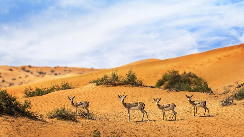 The Ritz-Carlton Ras Al Khaimah (Al Wadi Desert), fotka 23